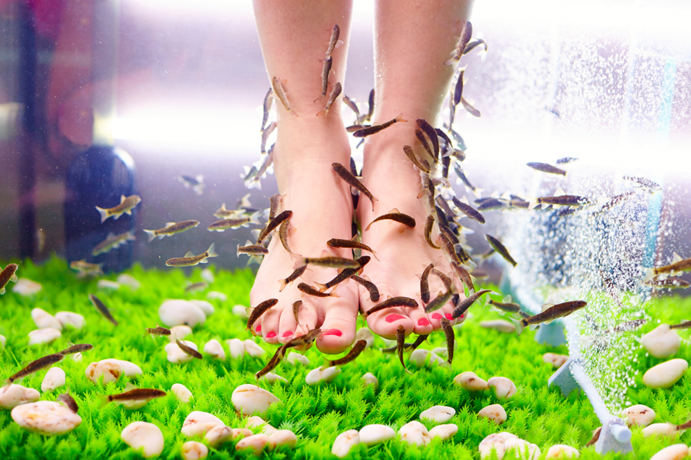 Garra rufa fish pedicures hygiene pain and infection for Fish spa near me