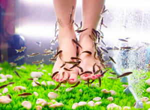 Woman Getting Garra Rufa Fish Pedicure