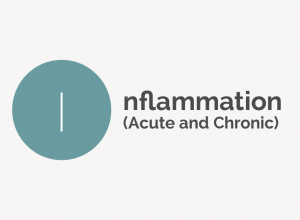 Inflammation Acute and Chronic Definition
