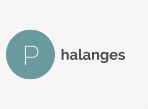 Phalanges