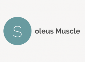 Soleus Muscle Definition